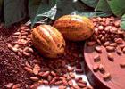 Какао как инвестиционный инструмент